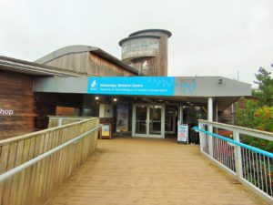 WWT Slimbridge – Review
